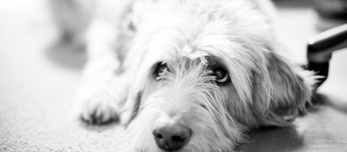Pets Photo Galleries